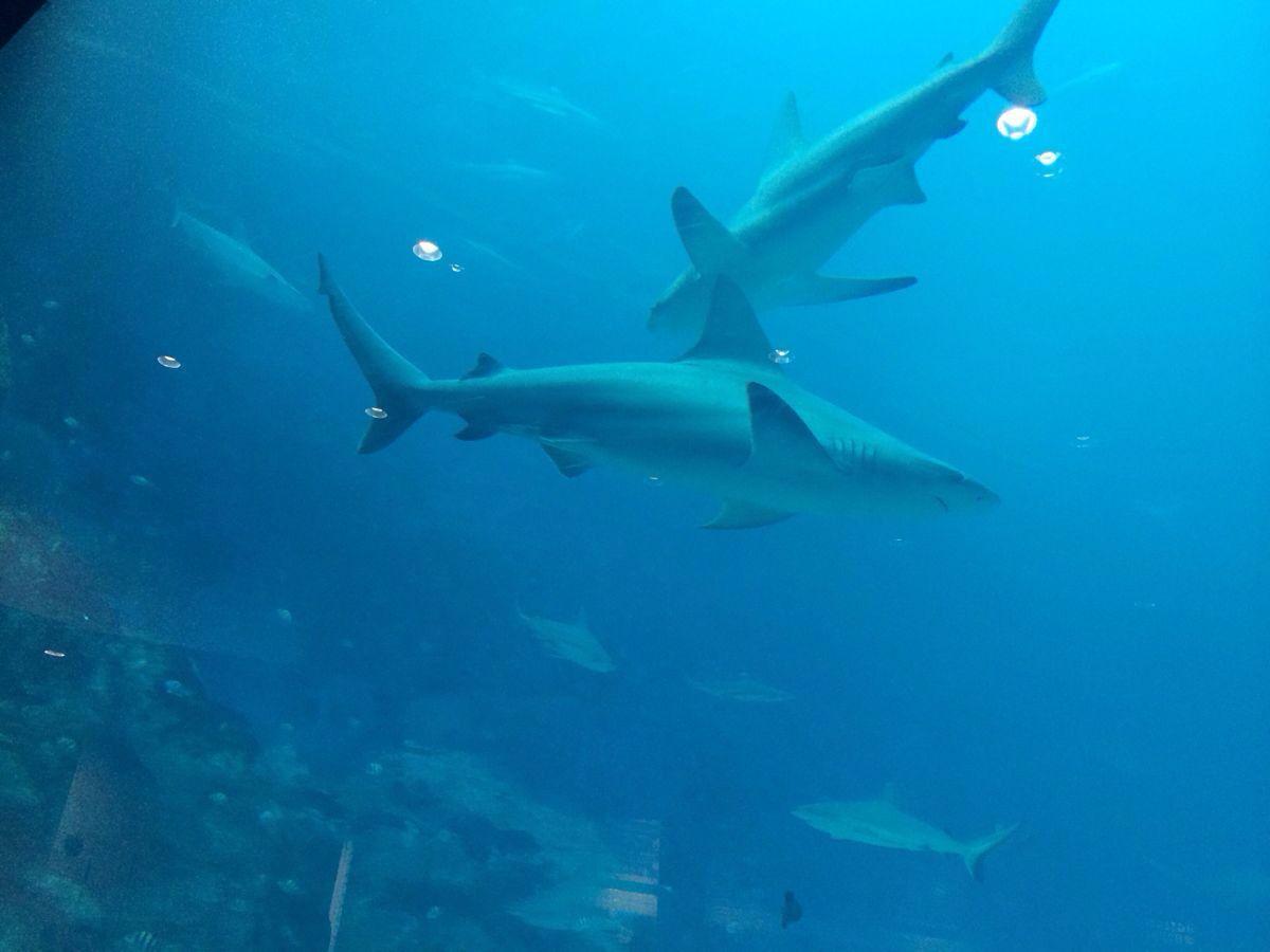 带小孩去的,感觉非常值得,停留了超过2个小时以上,去之前,小孩正好在看海洋动物小百科,所以进去之后,很多海洋生物都能叫的出名字,感觉非常有趣。一家人在最大的海洋玻璃幕墙前面坐下来,开开心心的看各种鱼儿游来游去,尤其是各种品种的魟鱼,我们还会贴到玻璃前面和他们打招呼。偌大的海洋馆没有不良的味道,很干净,管理的非常好。非常推荐带孩子的家庭去。趣味性和知识型兼而有之的景点。另外,个人的感受,看海洋生物有种很奇妙的愉快的感觉,令人身心放松。当天定了3个景点的联票,因为海洋馆停留的时间长,所以,后面的一个表演放弃了