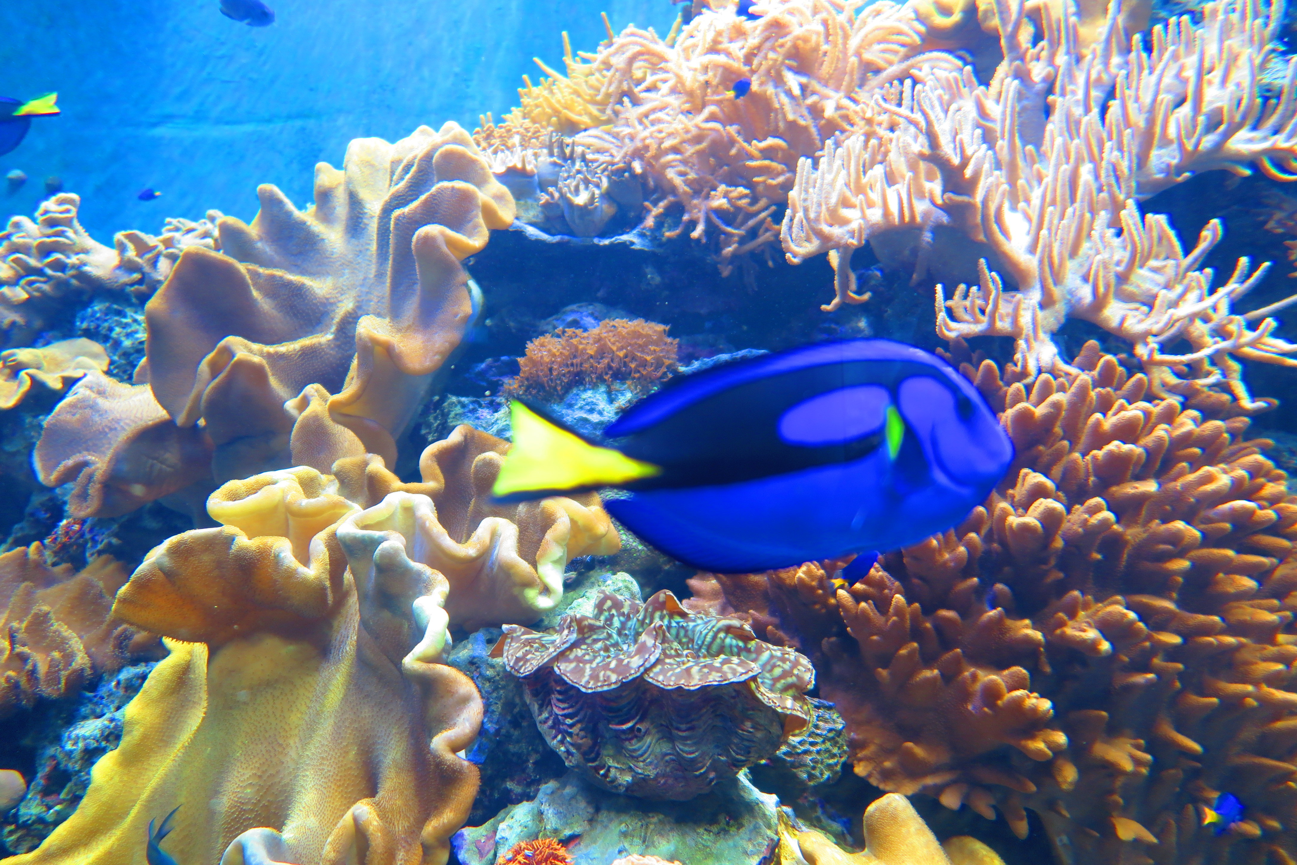 灿烂的海底世界--垦丁海洋生物博物馆