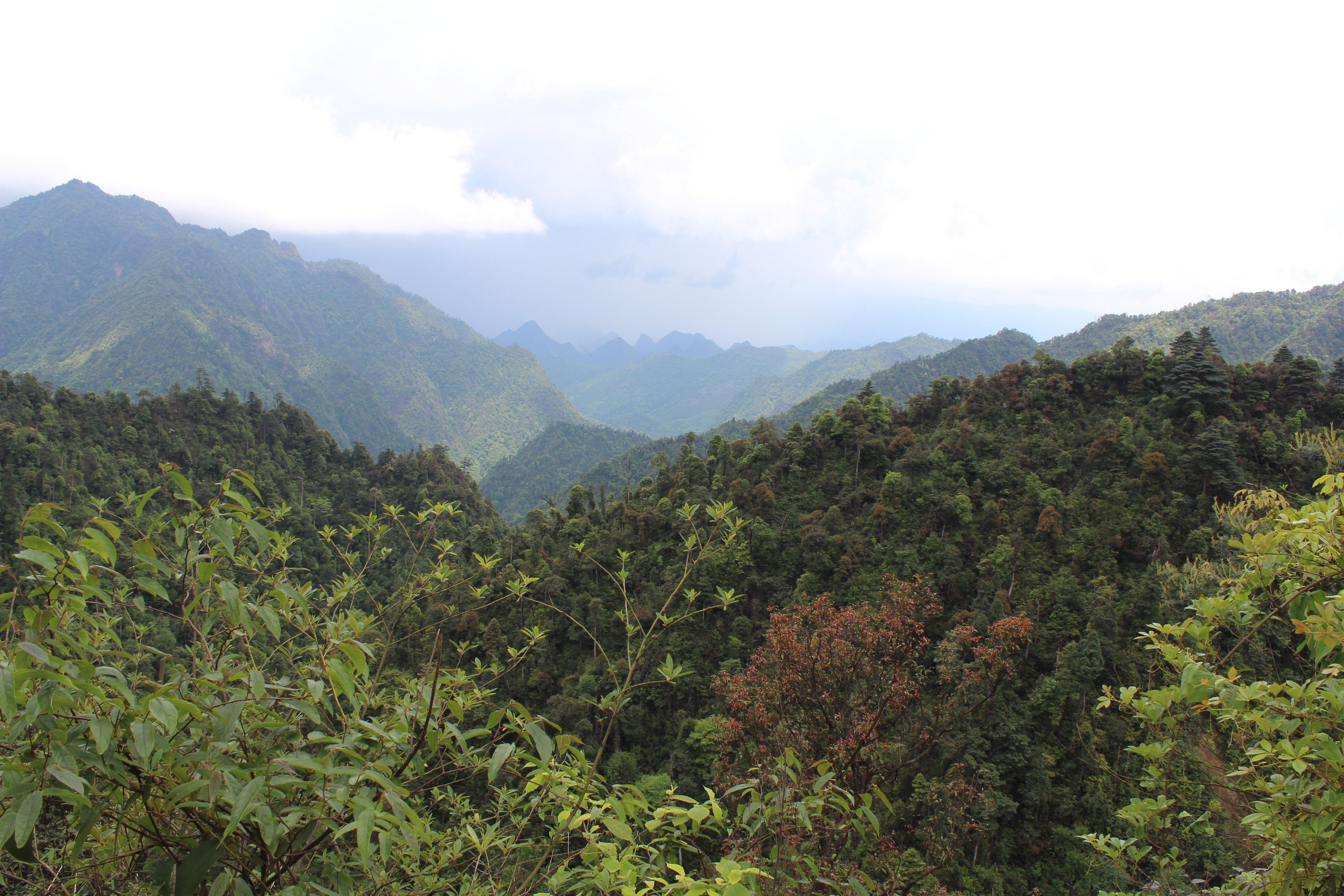 广西国家森林公园南岭五一旅游穷游攻略图片