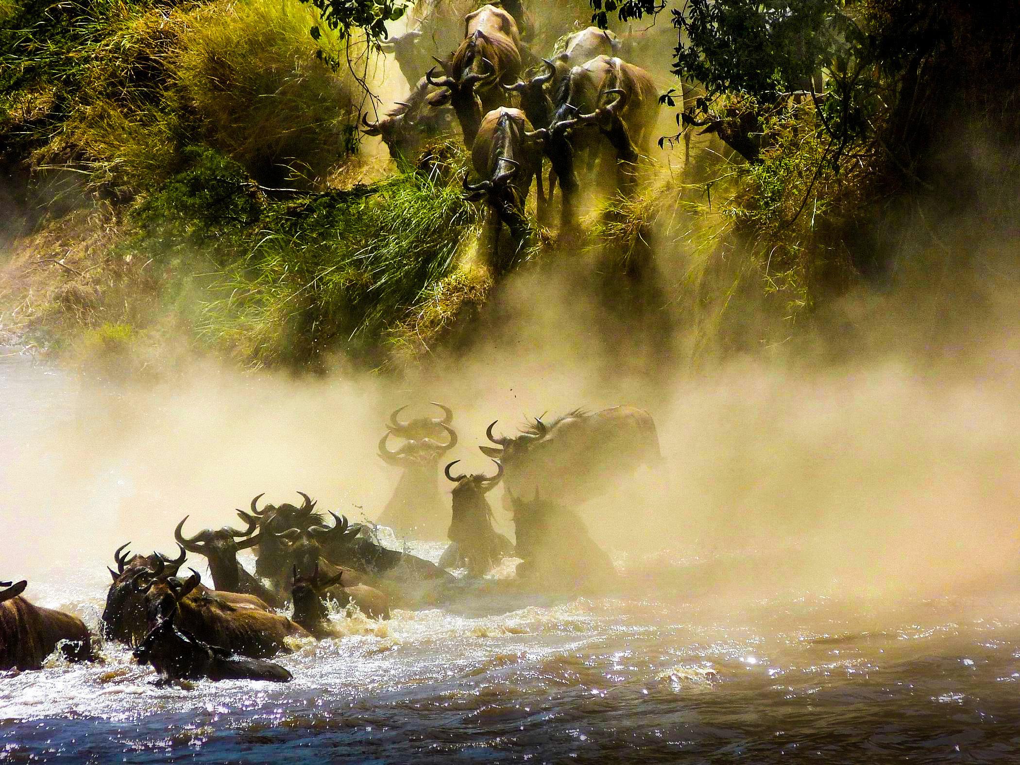 当你想象非洲时,你所想象的就是马赛马拉。美丽的合欢树、狮子一家亲密摩挲安享天伦之乐的场面、如雷贯耳的天国之渡,对许多人而言,马赛马拉国家保护区是东非之行的亮点所在,更是他们前往肯尼亚的唯一目的。 马赛马拉国家保护区是世界上最著名的野生动物保护区,这座动物的天堂由1672平方公里开阔的平原、林地和河岸森林组成。它还是世界上最大的野生哺乳动物家园,在这里生活着近100种哺乳动物和400多种鸟类。斑马、长颈鹿、羚羊在草原上觅食;在洋槐树林中你能观赏稀有的鸟类和猴群;大象和野牛在这里多得让你感到了审美疲劳;而马