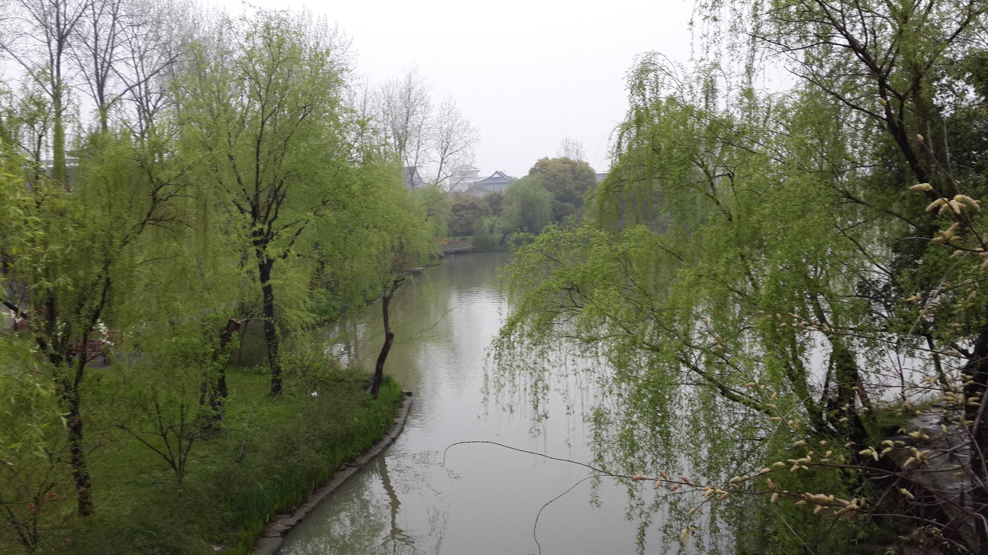 壁纸 垂柳 电脑 风景 风景壁纸 柳树 摄影 树 桌面 4128_2322