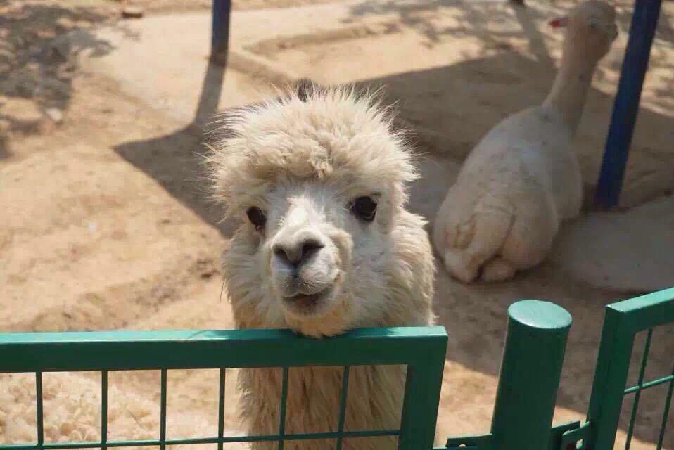 【携程攻略】河北石家庄石家庄市动物园好玩吗