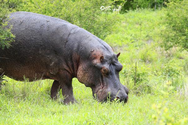 【南非】克鲁格国家动物园,动物们的天堂乐园