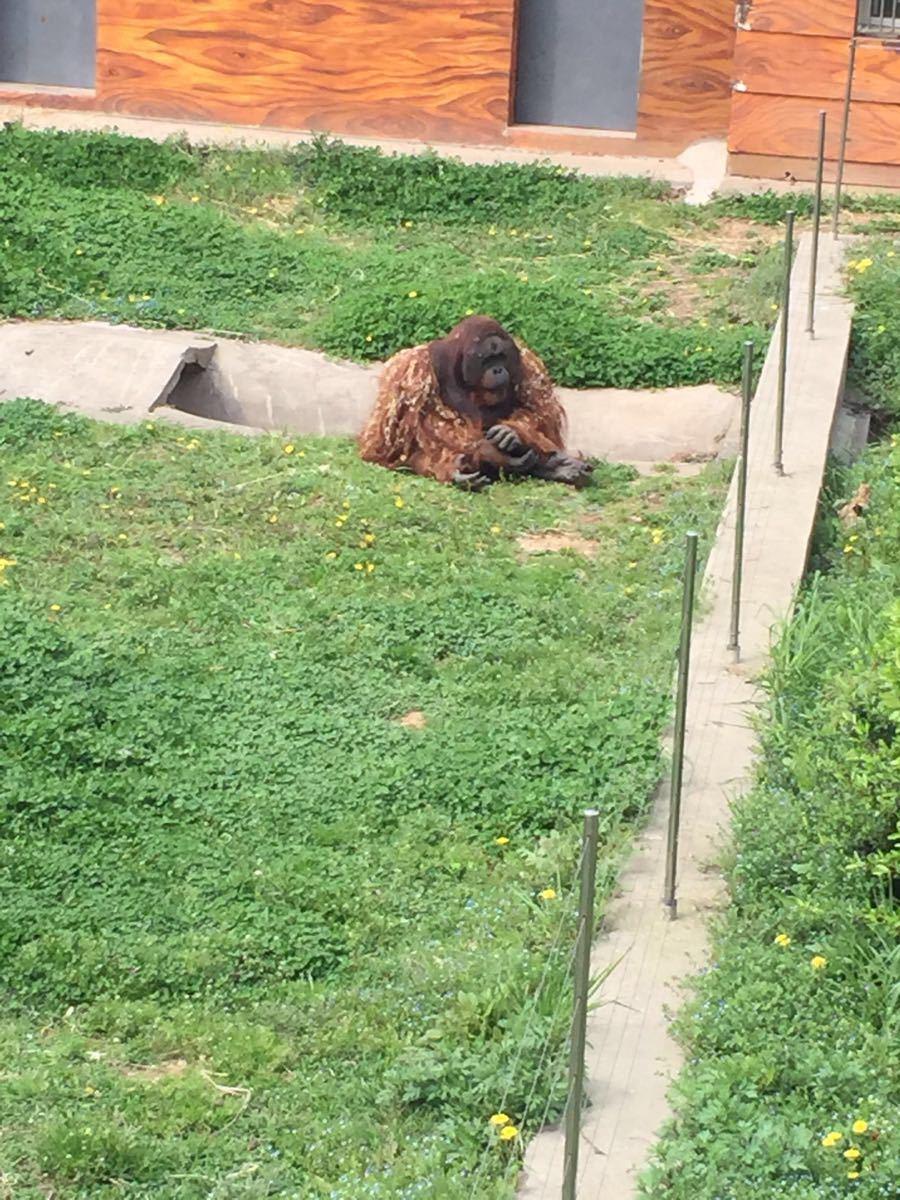 南京市红山森林动物园是国家4A级风景名胜区,位于南京城北,园区总面积68公顷。园内山峦叠嶂,绿化覆盖率达85[%],展示着世界各地珍稀动物216种2600余只。以独特的森林景观、丰富的动物资源、多彩的主题活动成为国内最具特色的动物园之一,每年吸引来自世界各地访客五百万余人次。 立足教育公众,贡献社会,南京市红山森林动物园在做好园内野生动物保育工作的基础上,同时肩负着江苏地区野生动物的收容救护工作,积极发挥着本土野生动物综合保护的重要职能。作为全国科普教育基地,红山森林动物园积极开展形式多样的公众教育项目