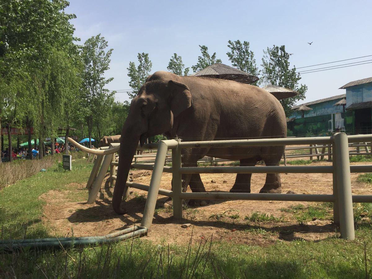 【携程攻略】辽宁沈阳森林野生动物园景点