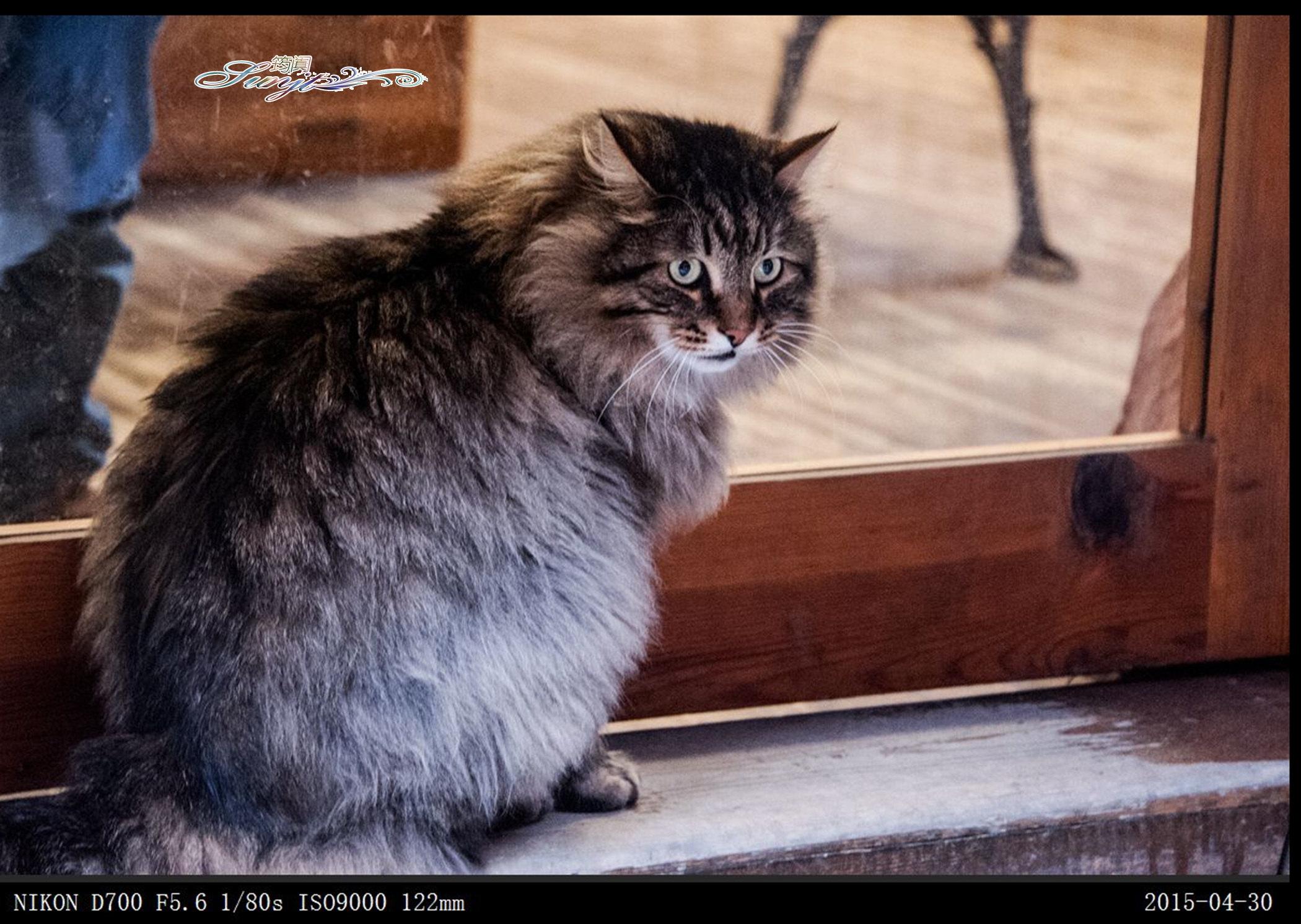 壁纸 动物 狗 狗狗 猫 猫咪 小猫 桌面 2100_1492