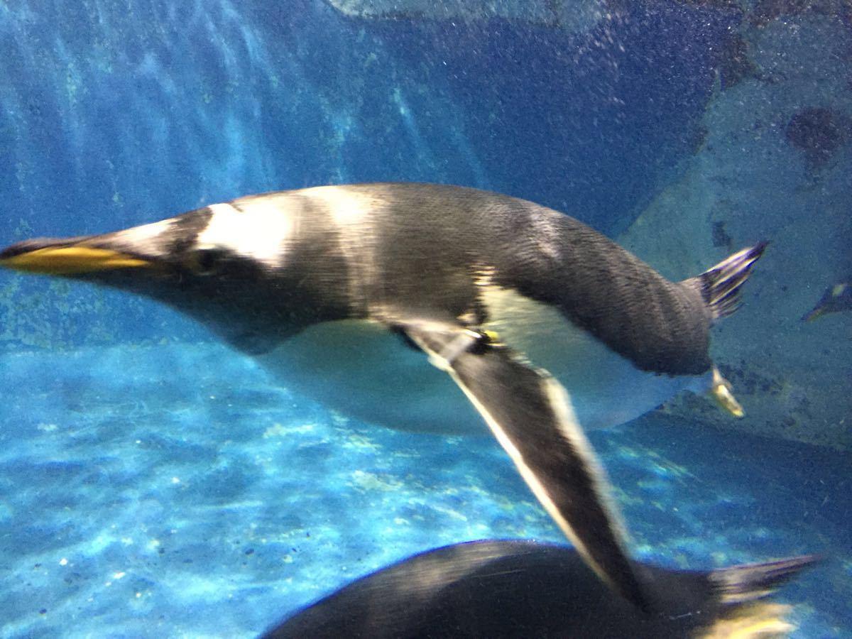 90块钱的门票,儿童免费,五馆通用,性价比非常高。极地馆超赞,各项展览动物的质量都处于国内乃至亚洲的领先水平,白鲸恋人表演很壮观,功夫海象憨态可掬,企鹅数量众多,孩子都看傻了,亚洲最大的北极熊极为彪悍海豚湾展馆很大,海豚表演很赞,不必多说,亚洲最长的海底隧道内容丰富,唯一的遗憾是当日正值周六,有人太多,摩肩接踵地过隧道,影响了欣赏质量。其它几个馆也很有特点,不多赘述了,有待大家自己体验。带孩子玩一天毫不空虚,只怕时间不够。推荐!