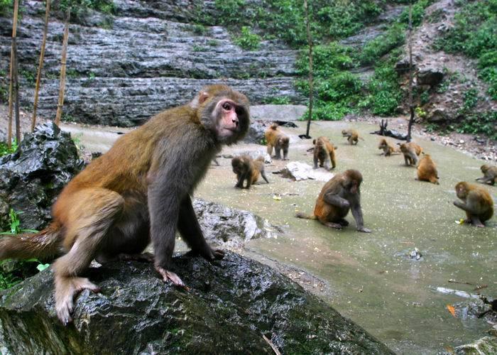 八达岭野生动物园猴山