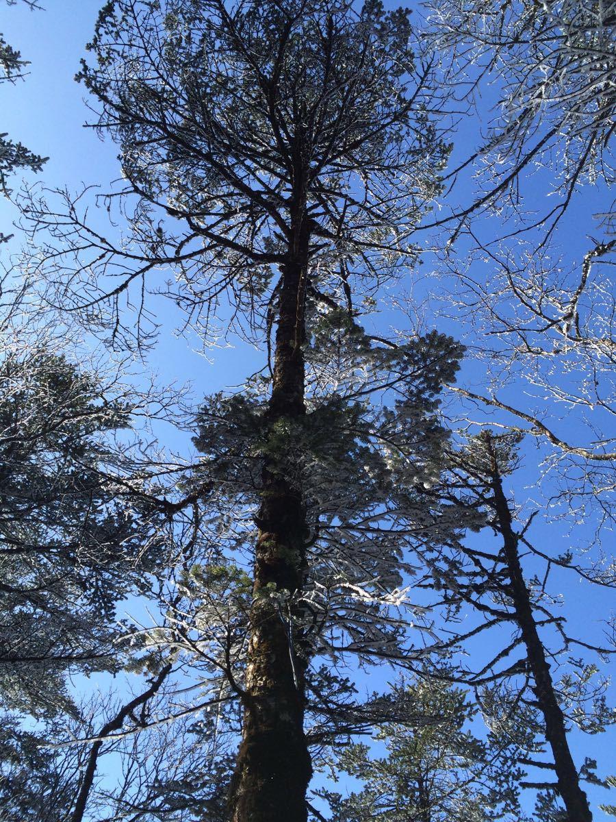 手机壁纸雪山和树木
