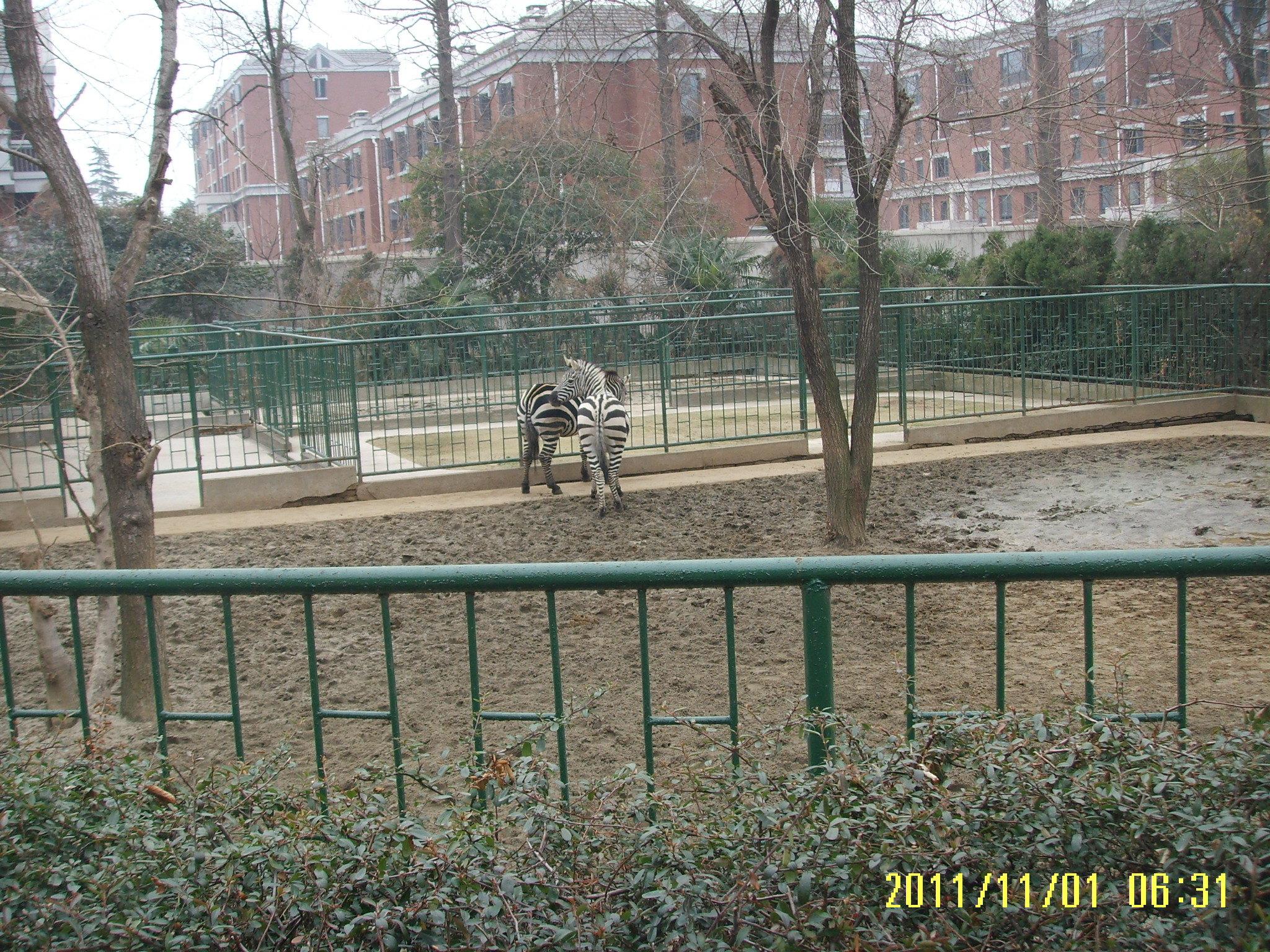 红山森林动物园位于南京玄武湖北面,距离南京火车站很近,由原来的南京玄武湖动物园迁移到此而建。园区很大,动物种类很多,可以看动物表演,还有儿童乐园,和所有城市动物园一样,特别适合带小朋友来玩。 红山森林动物园依山而建,园内有三座山,要做好爬山的准备。东大门进去是主峰大红山,海拔80米左右,山顶有仿六朝建筑大壮观阁,高三层,老远就能看见它,大红山设有猛兽区;北大门进去是小红山,设有鸟类区;西南边的沈阳村大门进去是放牛山,设有食草动物区、灵长动物区。从三扇大门的任何一扇进园都行,无特殊讲究,园中岔道很多,建议玩