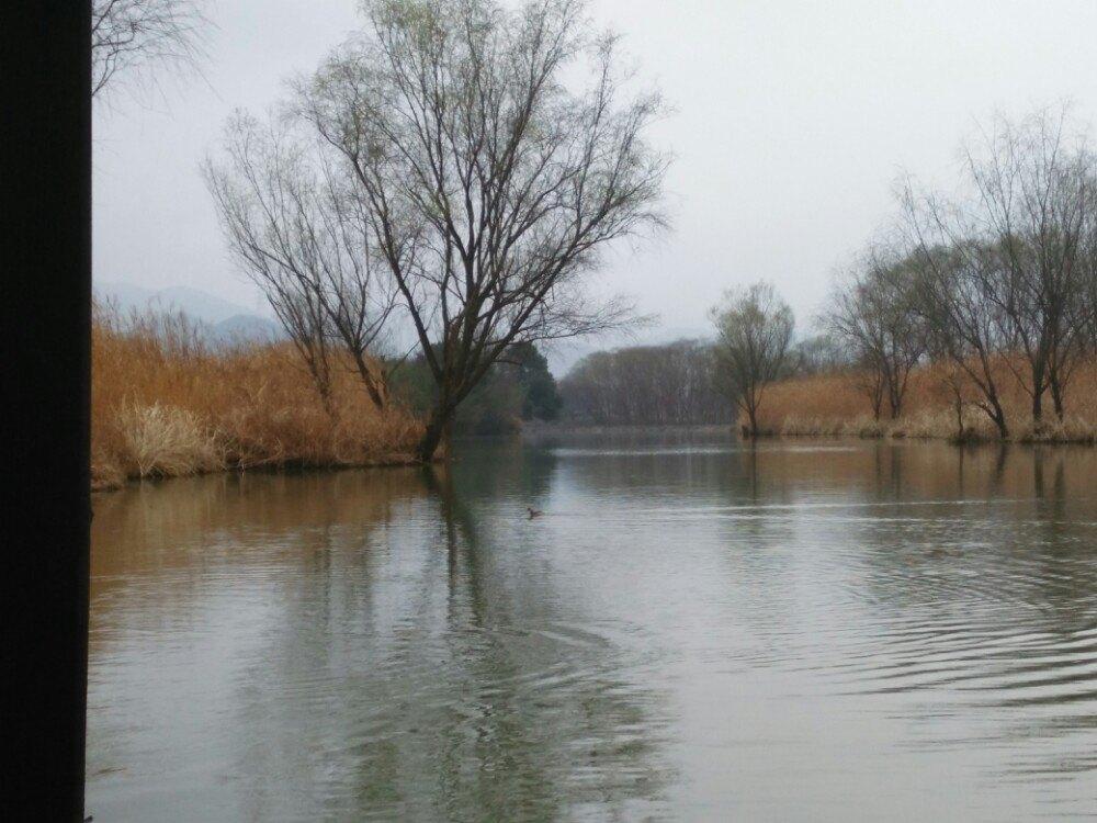 湿地禅意水墨素材
