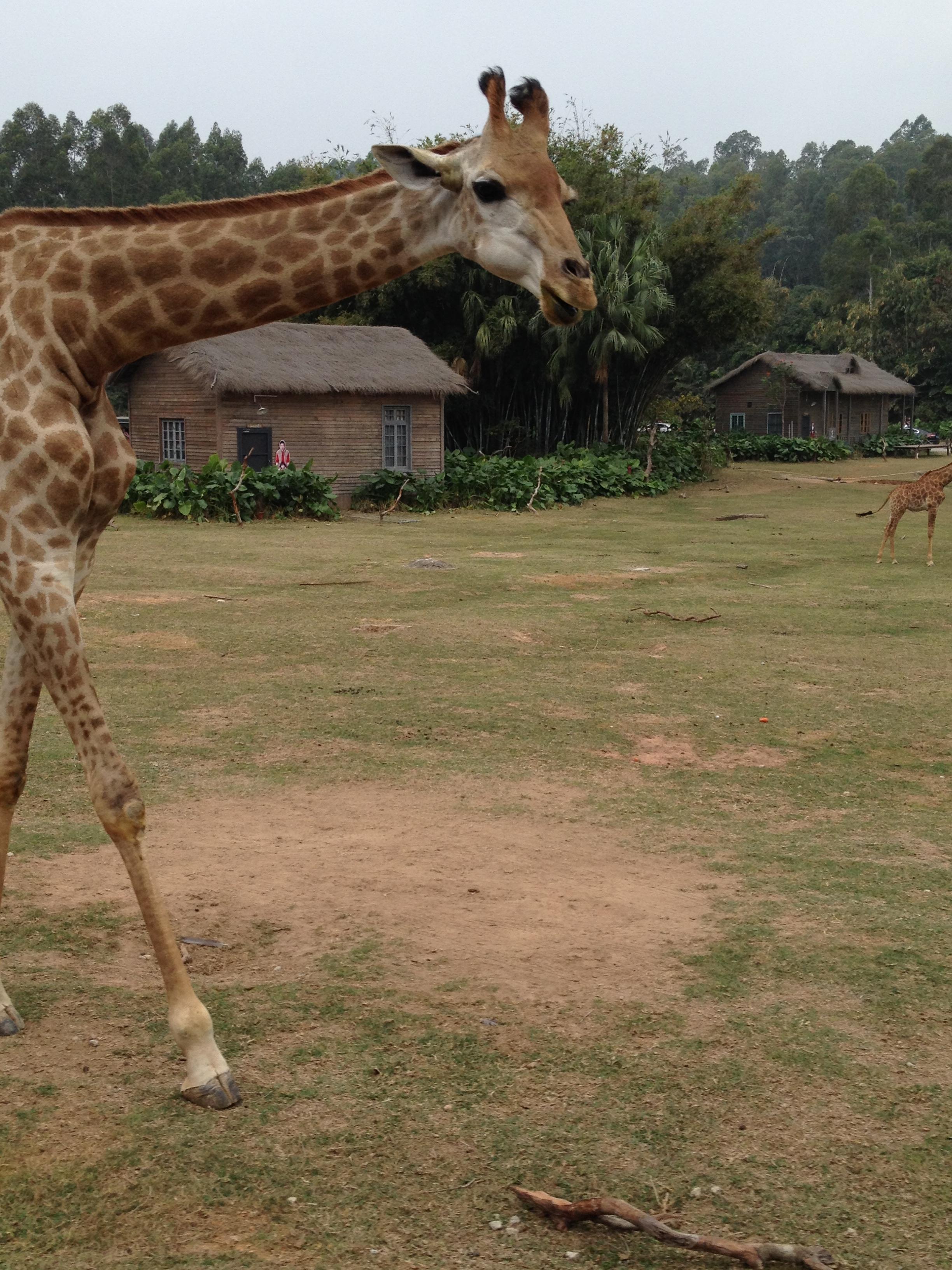 第2天 2015-02-21 深圳 广州 动物园出来那个人山人海啊,免费公交