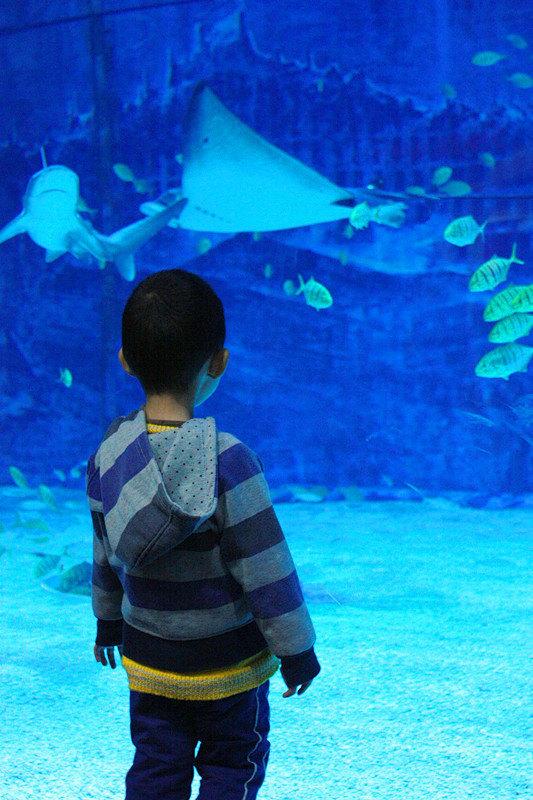加游站#北京海洋馆和动物园一日游