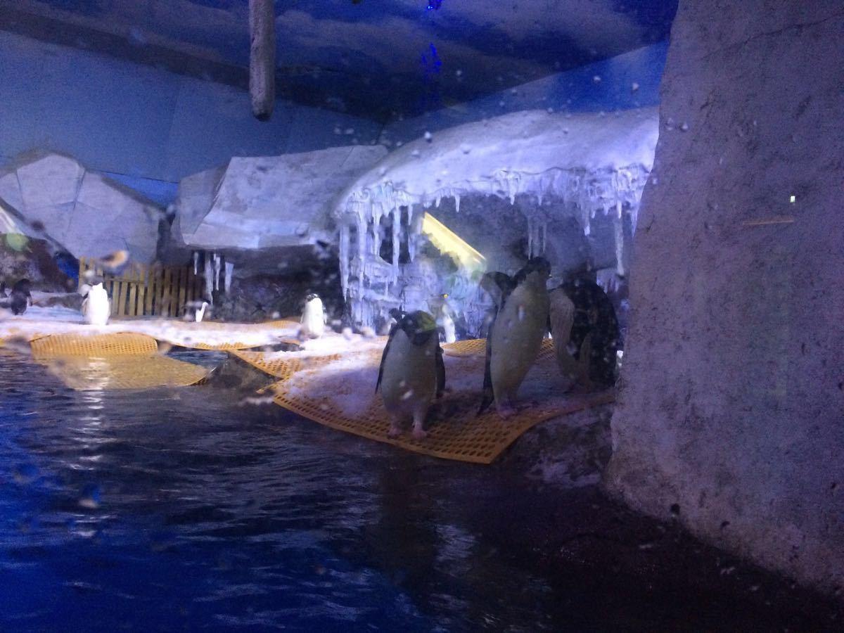 【携程攻略】湖北武汉海昌极地海洋世界景点