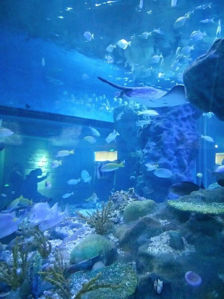 【携程攻略】湖北武汉海昌极地海洋世界家庭亲子点评
