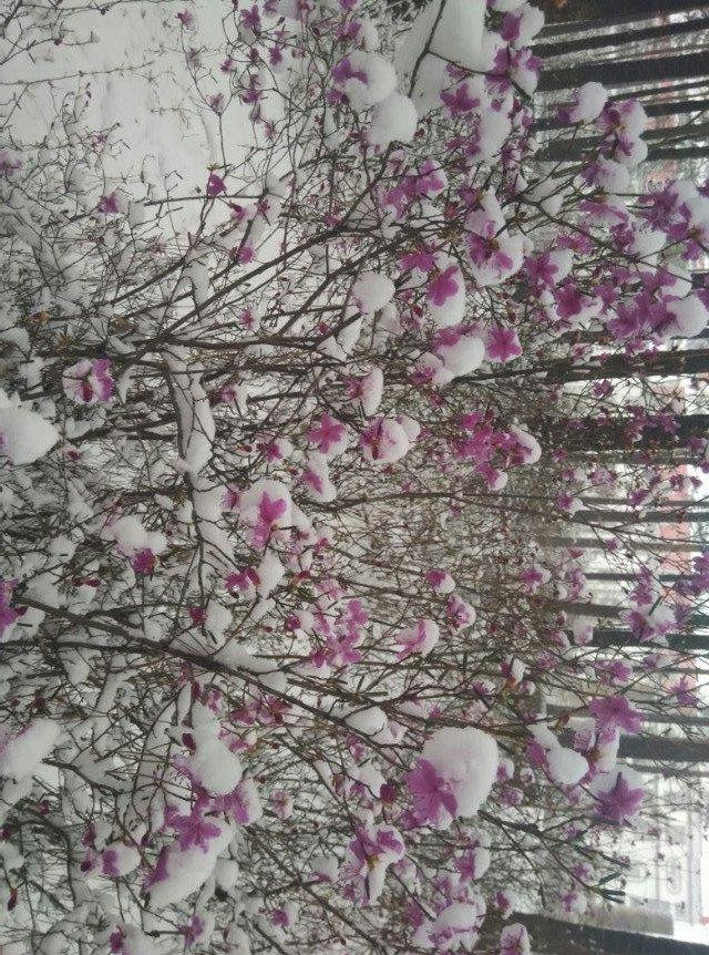 小城不大 风景如画 五月飘雪 漫天飞花