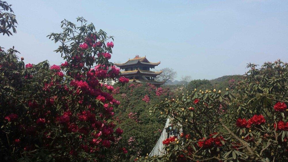 【携程攻略】贵州百里杜鹃风景区单独旅行点评