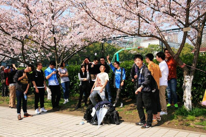 2015,同济大学赏樱花,还有不料很多网球帅哥-上海外形和棒球美女区别图片