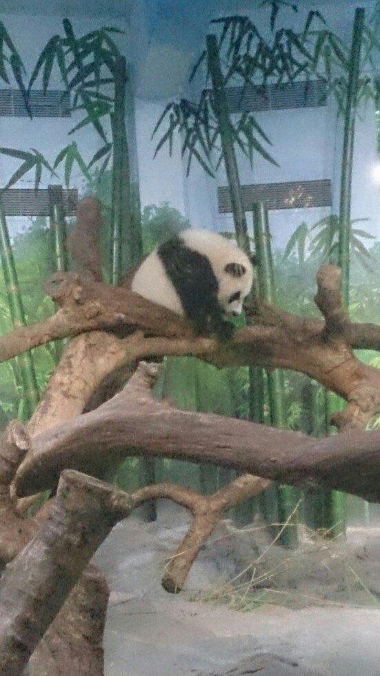 【携程攻略】广东长隆野生动物世界适合家庭亲子旅游