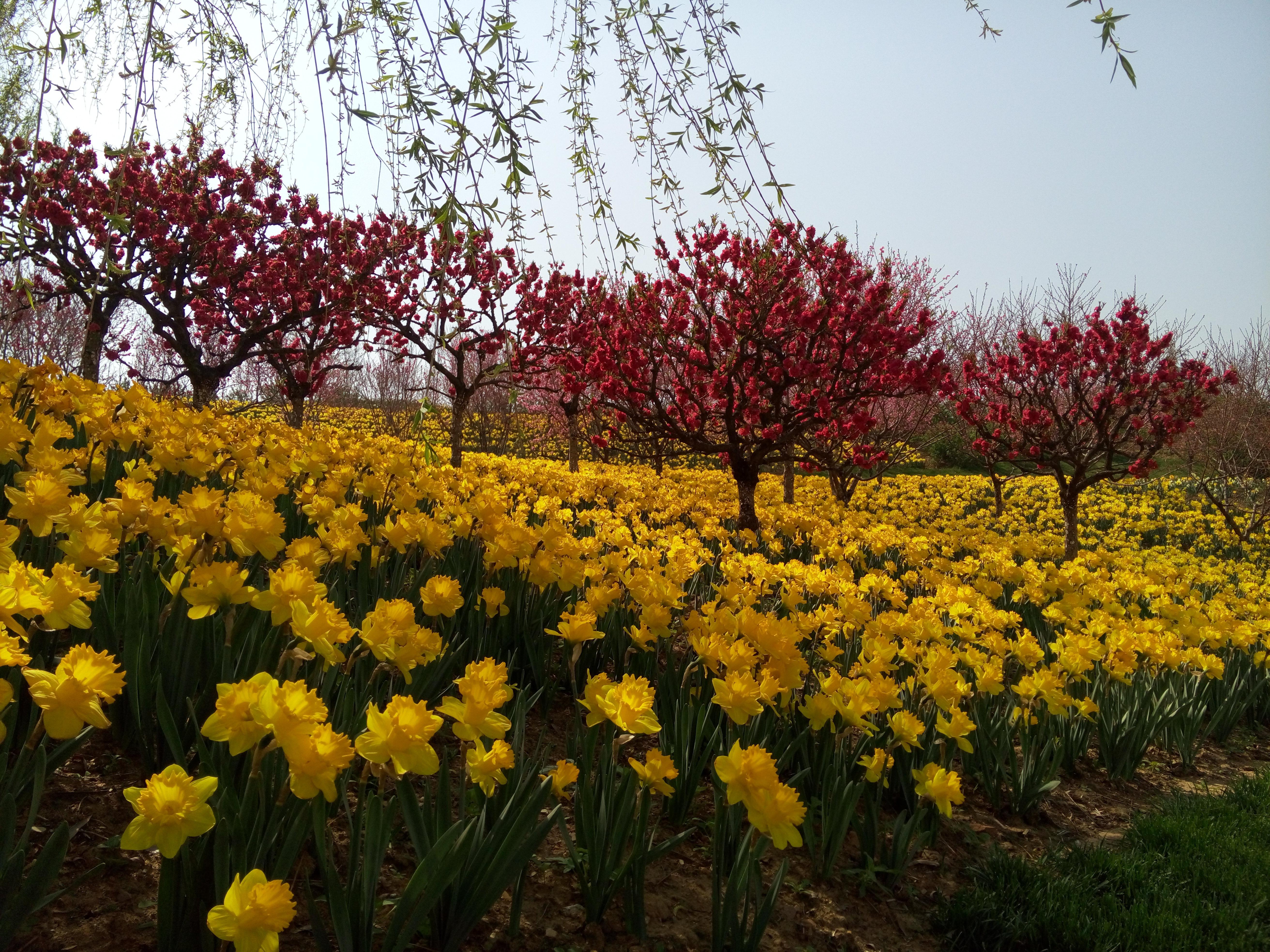 春游大连英歌石植物园 - 旅顺游记攻略【携程攻略】