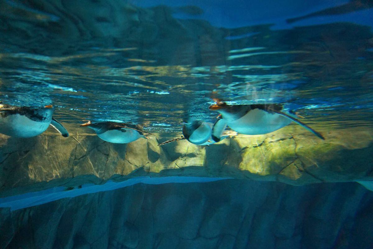 【携程攻略】香港海洋公园好玩吗,香港海洋公园景点样