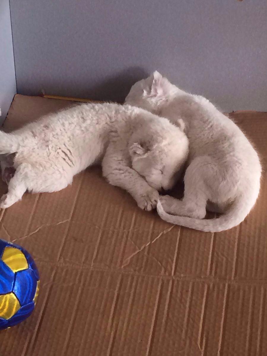 【携程攻略】浙江杭州杭州野生动物世界好玩吗