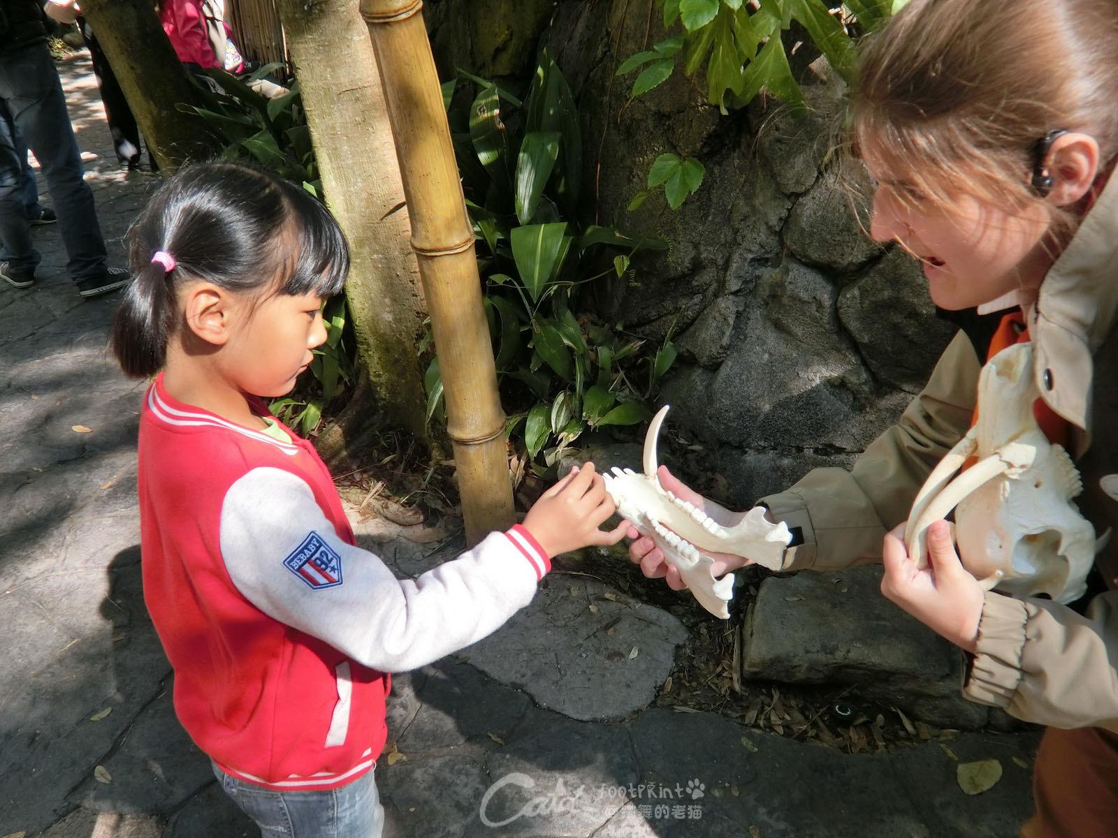 迪斯尼动物王国路边有工作人员给小朋友讲解