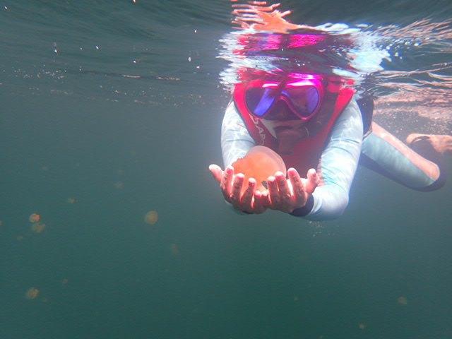 就在湖水中慢慢的游,你要做的就是选一个阳光好的地方,那些可爱的水母