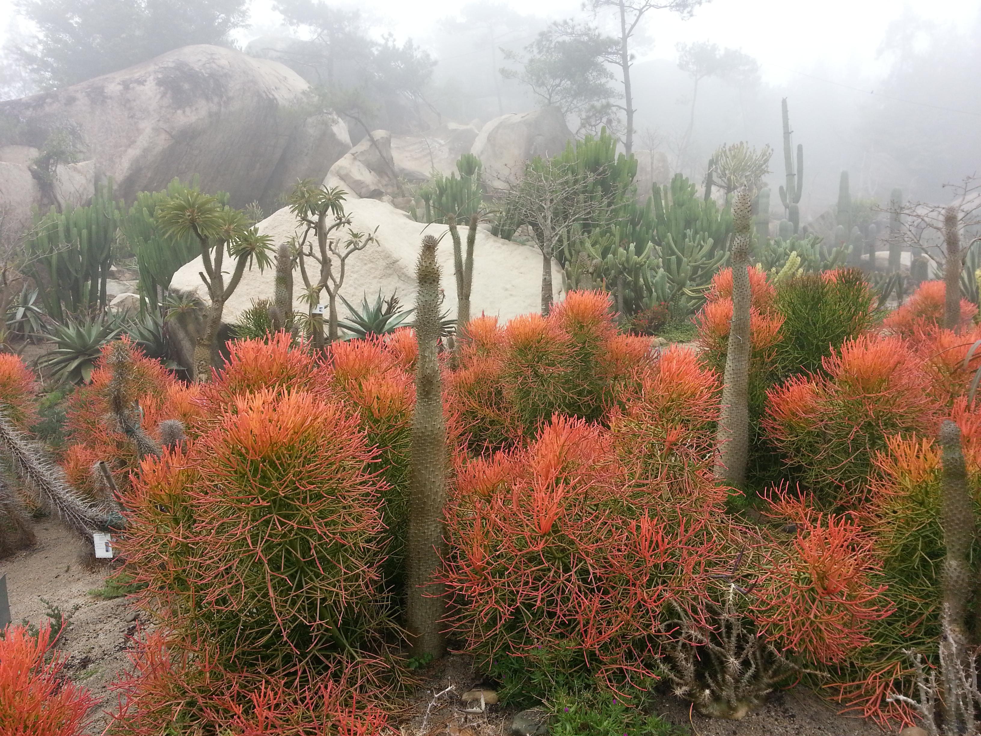 外最好的沙生植物造景