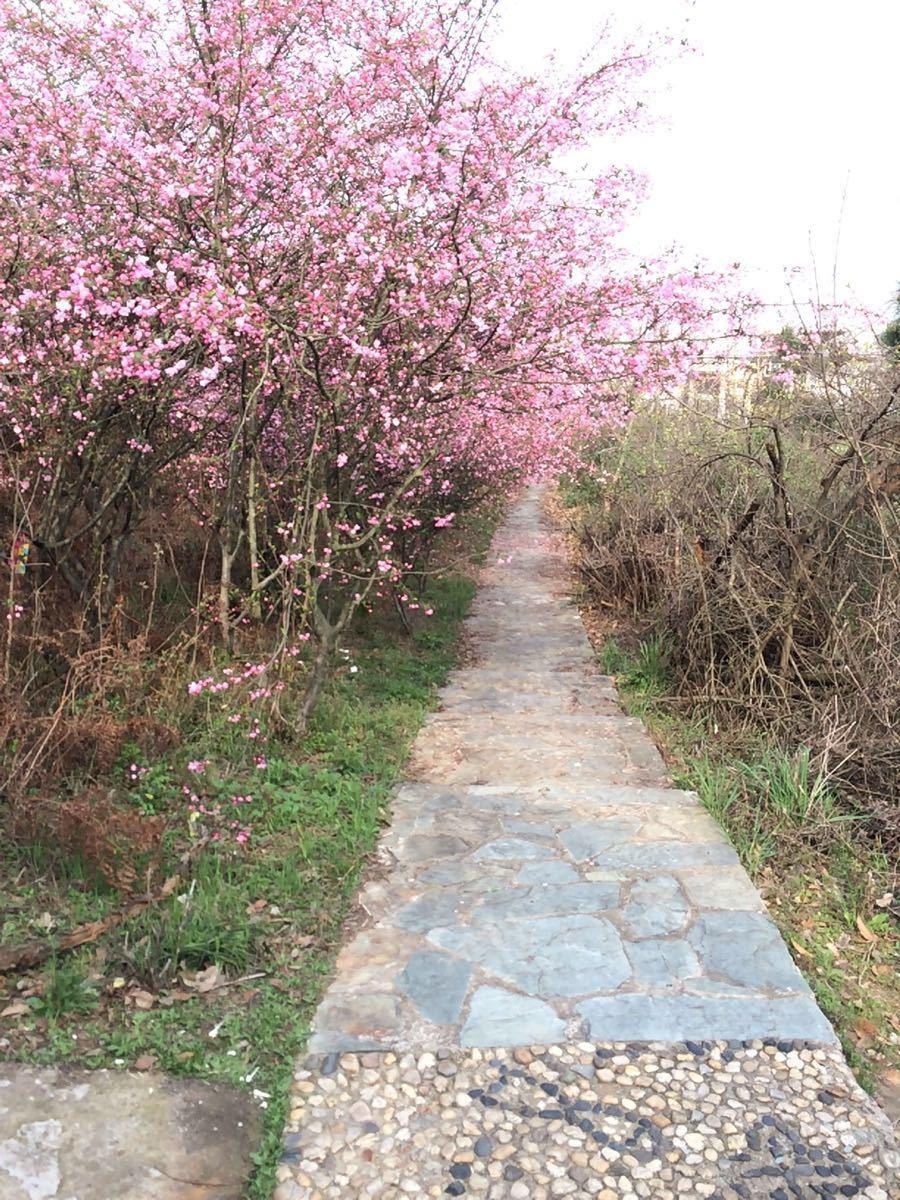 【携程攻略】湖北龙泉山风景区景点