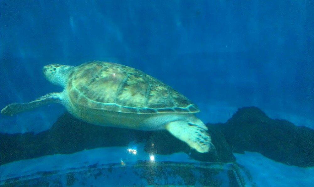 壁纸 动物 龟 海底 海底世界 海洋馆 水族馆 1000_598图片
