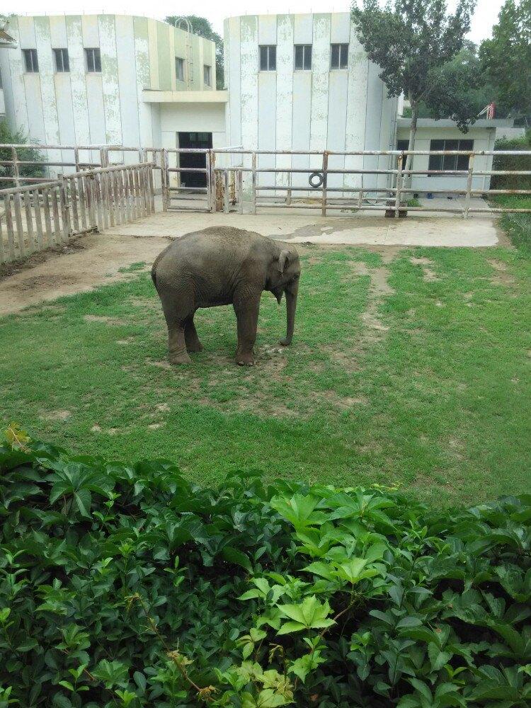 济南动物园jinan zoo