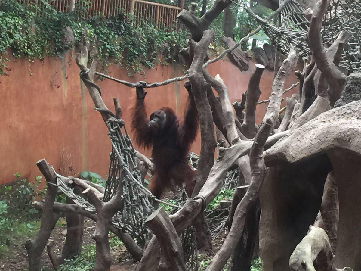 【携程攻略】广东长隆野生动物世界景点