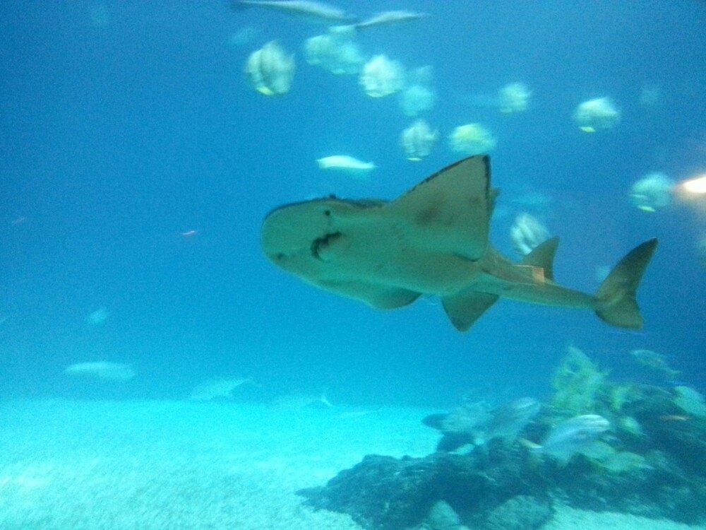 六条腿的海底动物