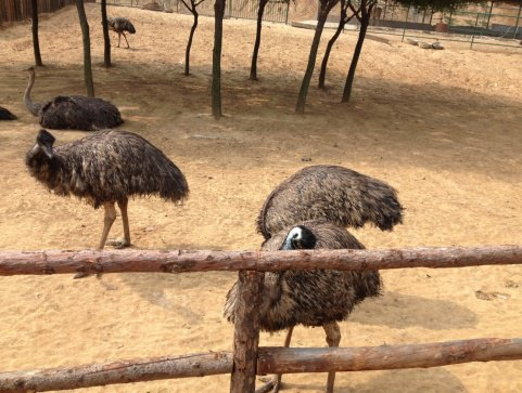【携程攻略】山东森林野生动物世界适合家庭亲子旅游