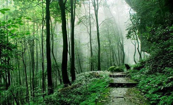 金城山森林公园图片