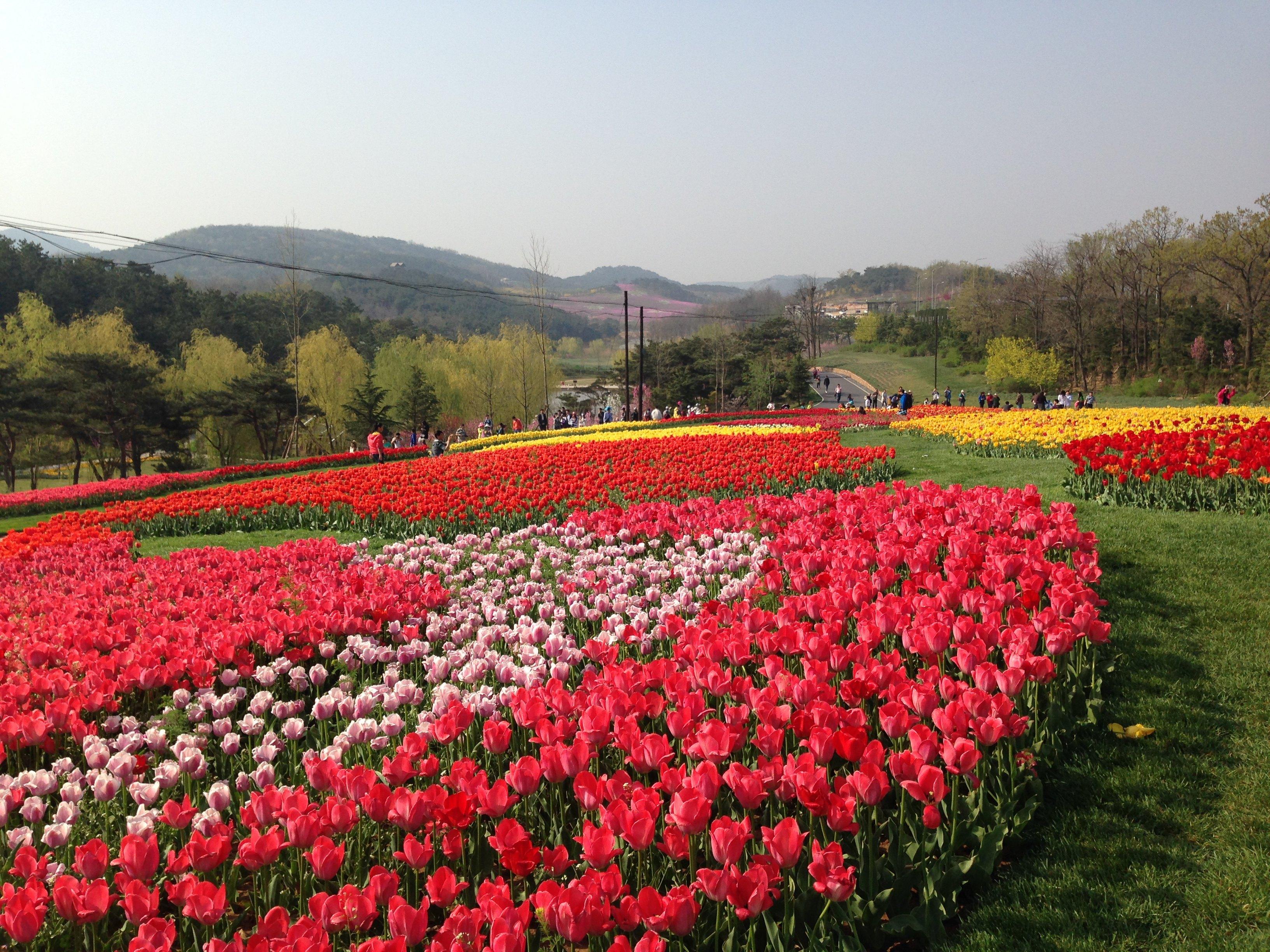 春游大连英歌石植物园