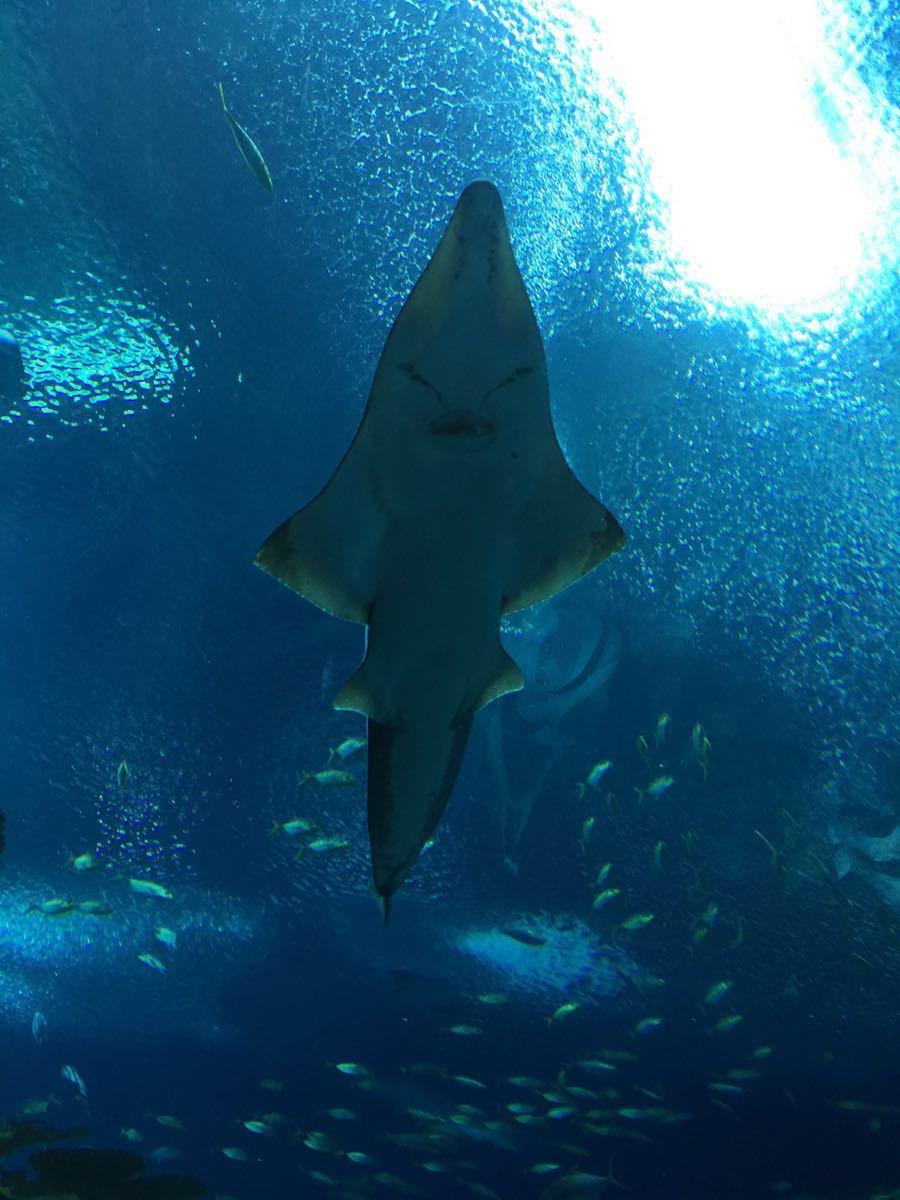 不过做了很多保护措施,动物们都很可爱,鲸鲨馆的场景很像捕鱼游戏里的