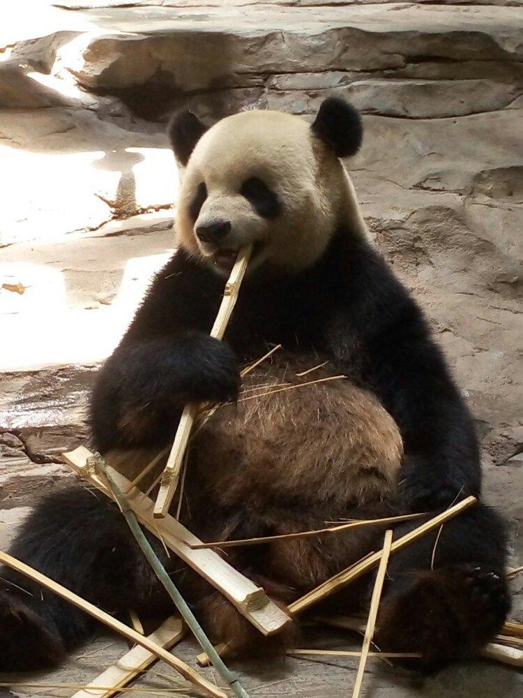 2015动物园