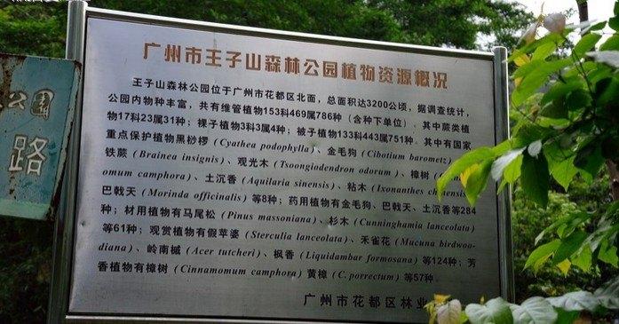 王子山森林公园门票_【携程攻略】广东王子山森林公园景点,门票30 元/人,5