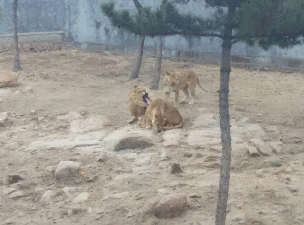 【携程攻略】山东神雕山野生动物自然保护区家庭亲子
