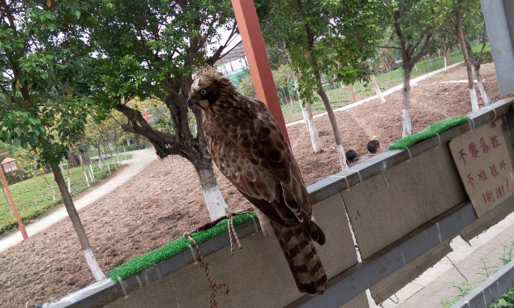 【携程攻略】广东东莞香市动物园好玩吗