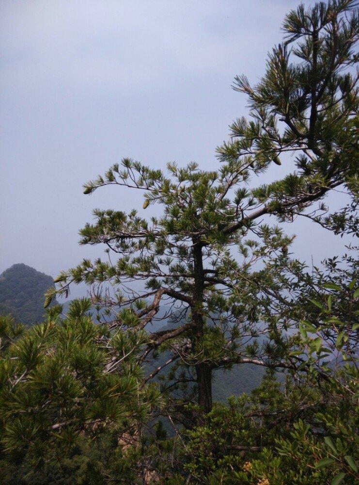吴山旅游风景区