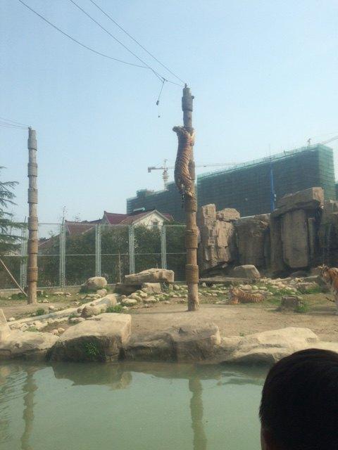 【携程攻略】上海上海野生动物园适合朋友出游旅游吗