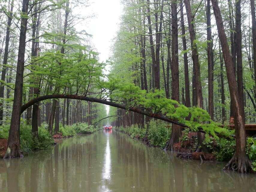 【携程攻略】兴化李中水上森林公园适合朋友出游旅游图片