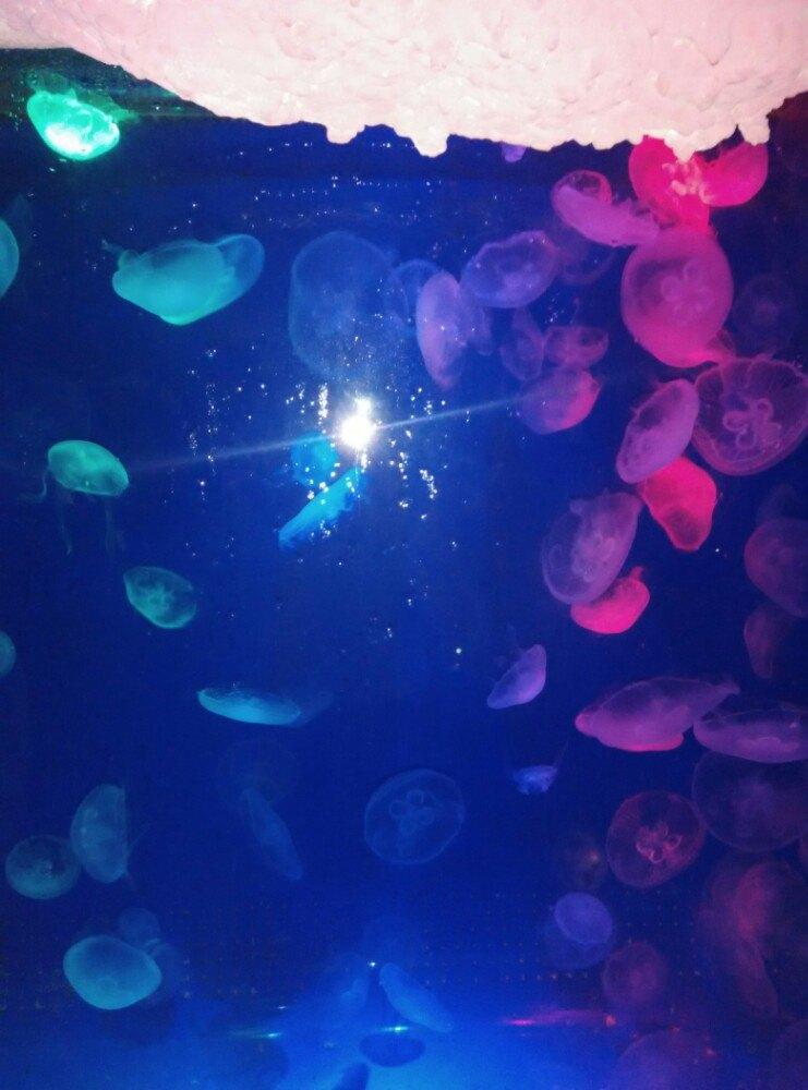 台州海洋世界