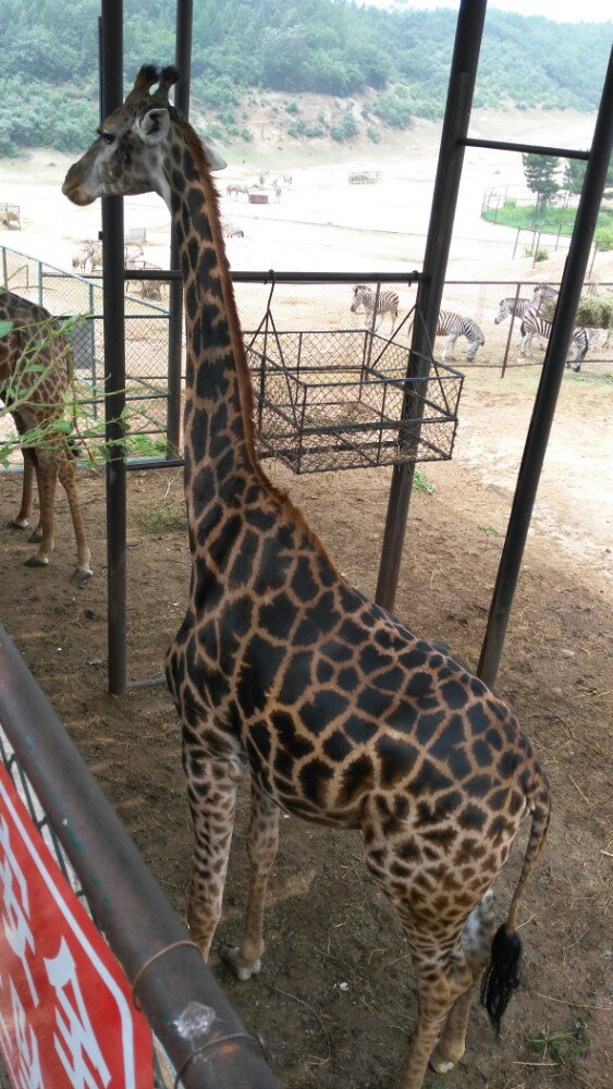 【携程攻略】延庆八达岭野生动物园景点