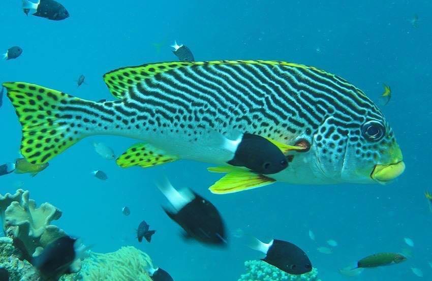 澳大利亚大堡礁scuba潜水攻略 装备 padi潜水证考试