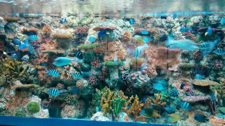 【携程攻略】新疆乌鲁木齐海洋馆景点