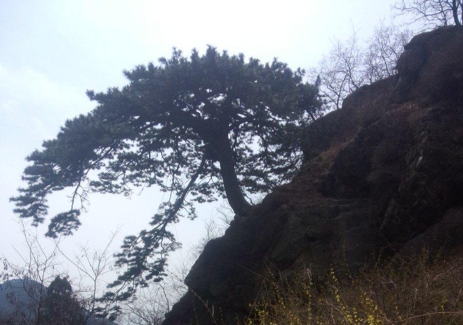 【携程攻略】山东泰安泰山泰山风景区好玩吗